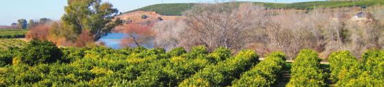 biovalle del guadalquivir palma del Río (Córdoba)